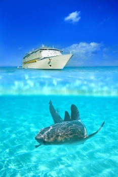 Nurse shark in the crystal clear waters at Grand Cayman, with a cruise liner above water in the background. Crystal clear waters