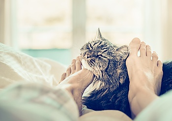 Home scene with cat in bed. Women's feet are scratching the neck of the cat